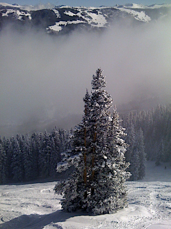 snow covered tree at Aspen Highlands as fog dissipates