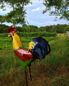 A beautiful view of Early Girl Farm with Patty's brightly colored rooster sculpture in the foreground.