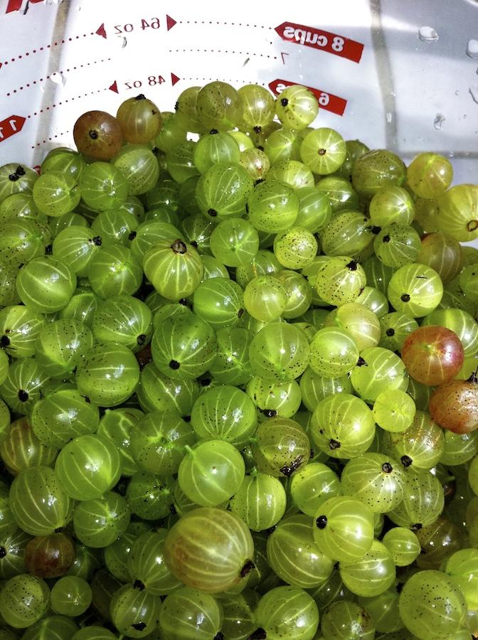 Just Picked Gooseberries